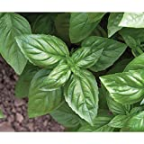 David's Garden Seeds Herb Basil Genovese D911A (Green) 500 Organic Seeds