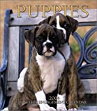 Puppies Weekly 2004 Calendar