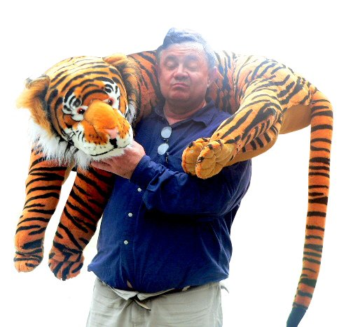Massive tiger teddy