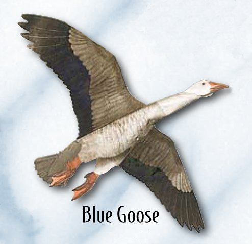Jackite Blue Goose - Assembled