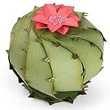 Sizzix Lkanase Thinlits Die Barrel Cactus LK