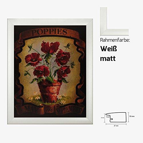 Kunstdruck Poppies May to September Mohnblumen in Vase gemalt 40 x 50 cm mit MDF-Bilderrahmen Pisa & Acrylglas reflexfrei, viele Farben zur Auswahl, hier Weiß matt