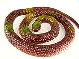 いたずらグッズ  へび 蛇 ヘビ とぐろへび  おもちゃ  ゴム製