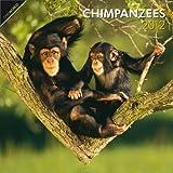 Chimpanzees 2012 Square 12X12 Wall Calendar