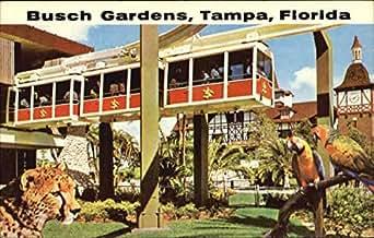 Busch Gardens Tampa Florida Original Vintage Postcard At