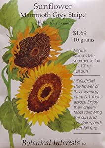 Mammoth Grey Stripe Sunflower Heirloom Seeds