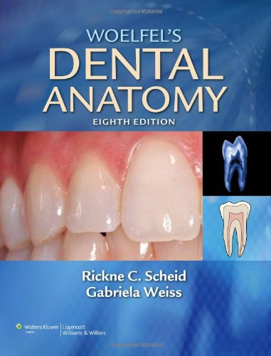 Woelfel'S Dental Anatomy: Its Relevance To Dentistry front-863701