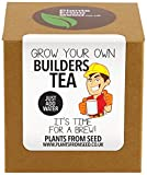 Plants From Seed Grow Your Own Builders Tea Plant