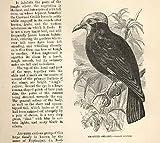 戴冠させた Grackle 1862 羽の木の自然史の鳥