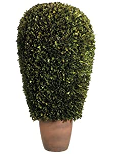 """14""""Dx30""""H Preserved Boxwood Ball Topiary in Pot Green"""