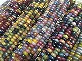 鹿児島産 グラスジェムコーン glass gem corn マルシェ赤坂 栽培採取種子 (20粒)
