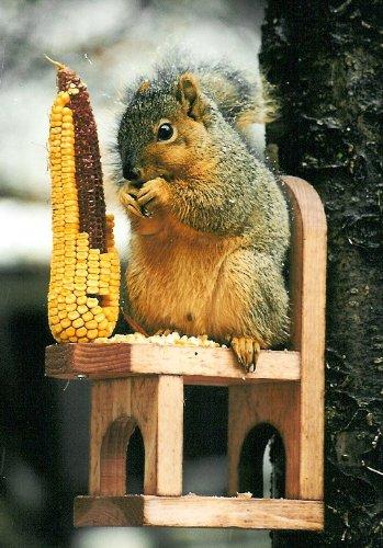 Cheap Looker Squirrel Chair (Squirrel Chair)