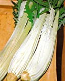 100 Cardoon Seeds, Avorio Large Smooth by Seeds and Things