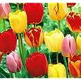Flower Plants & Seeds
