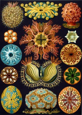 Haeckel Sea Squirts Wooden Jigsaw Puzzle