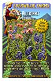 Everwilde Farms - 1/4 Lb Texas Bluebonnet Native Wildflower Seeds - Bulk Seed Packet