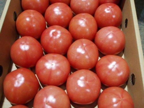 沖縄県産 トマト約4kg