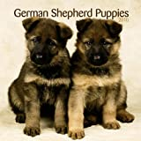 German Shepherd Puppies 2010 Mini Wall ~ BrownTrout Publishers Inc