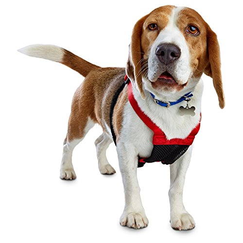 How To Buy The Best Dog Collar Or Harness Petco My Pet Store