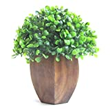 Miracle Retail Artificial Topiary with Wooden Pot(Green, 18cm)