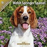 Welsh Springer Spaniel 16 Month 2011 Calendar