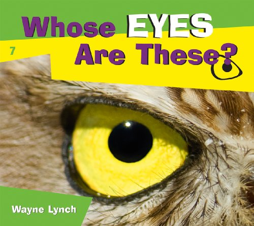 Eye for an eye masters thesis