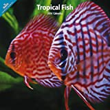 Various Tropical Fish 2014 Wall Calendar