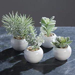 artificial succulents powder potted 7 13cm set of 4 kitchen home. Black Bedroom Furniture Sets. Home Design Ideas