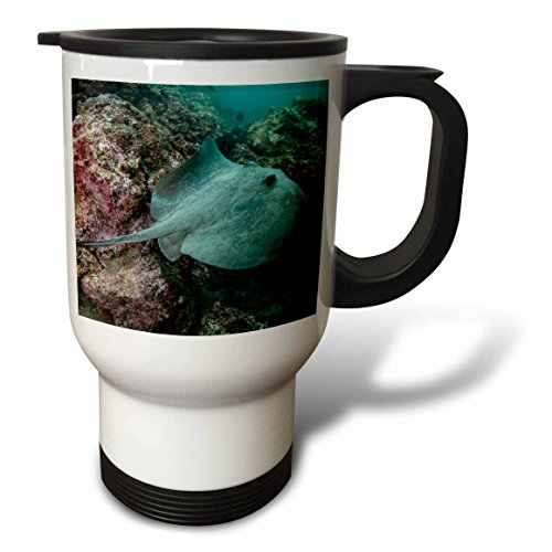 Danita Delimont - Marine life - Diamond Stingray, Galapagos Islands, Ecuador. - 14oz Stainless Steel Travel Mug (tm_228904_1)