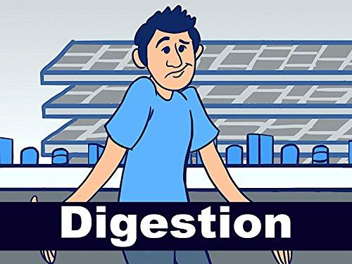 Digestion - Season 1