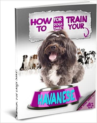 House training your havanese