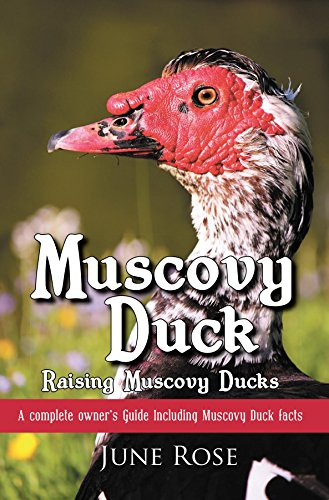 Muscovy Duck: Raising Muscovy Ducks, by June Rose