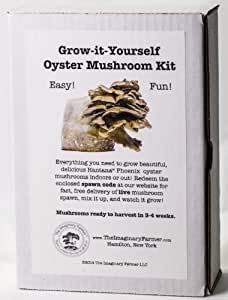 Amazon.com : Oyster Mushroom Growing Kit - Premium Edition