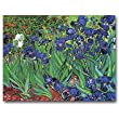 Irises - Thank You Gift Enclosure Cards (set of 12)