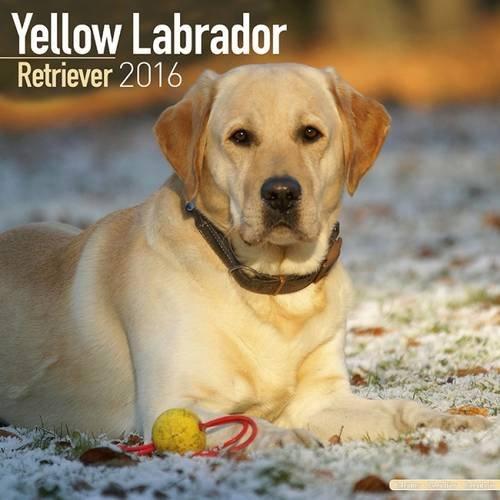 Labrador Retriever (Yellow) Calendar - Only Dog Breed Labrador Retriever (Yellow) Calendar - 2016 Wall calendars - Dog Calendars - Monthly Wall Calendar by Avonside