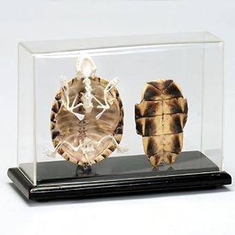 turtle skeleton car interior design. Black Bedroom Furniture Sets. Home Design Ideas