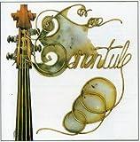 Tarentule by Tarentule (2013-08-02)