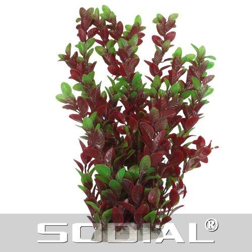 Plante aquarium poisson rouge for Plante bocal poisson rouge