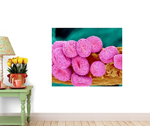 Geranium Pollen At A Magnification Of X400 Wall Decal - 18 Inches W X 15 Inches H - Peel And Stick Removable Graphic