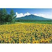 300ピース ヒマワリ畑と斜里岳-北海道 (26x38cm)