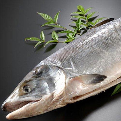 サーモン専門店岩松 北海道産 新巻鮭(秋鮭)一本物【約3キロ】化粧箱入