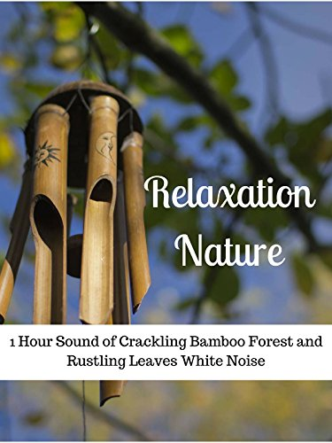 Relaxation Nature: 1 Hour Sound of Crackling Bamboo Forest and Rustling Leaves White Noise