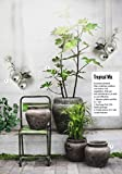 MarimoMossBall x 5+1 FREE!-Live Rare Easy Decor Plant. They are the living Moss ball.(Ship From USA) Just place them into any water container and create your own special water garden!