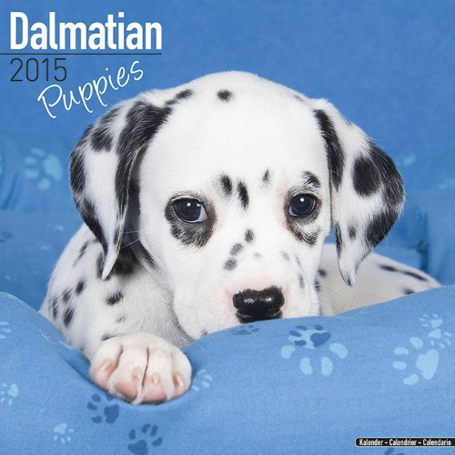 Dalmatian Puppies Calendar - Breed Specific Dalmatian Puppies Calendar - 2015 Wall calendars - Dog Calendars - Monthly Wall Calendar by Avonside