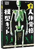 光る!人体骨格模型キット