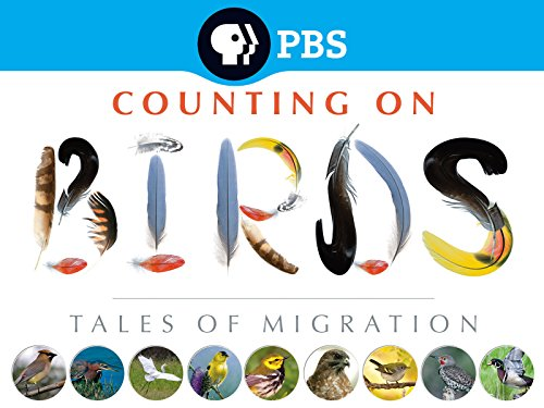 Counting on Birds: Tales of Migration - Season 1