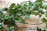 ~Coco Heart~ アイビー枝付き (木の実・ドライフラワー・リース資材 ,プリザーブド、X'mas)