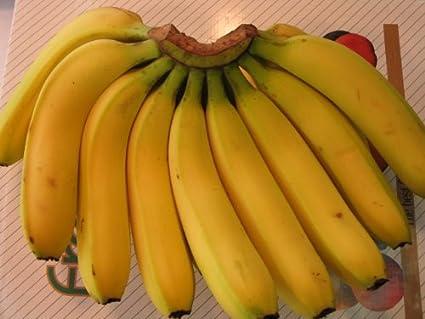 激ウマ!バナナ15本