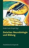 Zwischen Neurobiologie und Bildung: Individuelle Förderung über biologische Grenzen hinaus