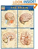 Brain (Quickstudy: Academic)